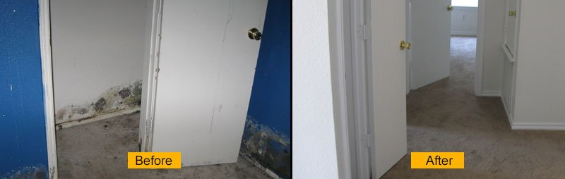 Mold Remediation & Restoration Services