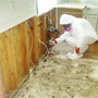 Mold remediation service Chicago